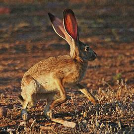 Tom Janca - Jack Rabbit Fright And Flight