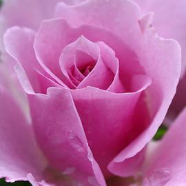 Juergen Roth - James Kelleher Rose Garden