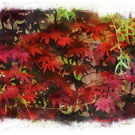 EricaMaxine  Price - Japanese Maple Under the Willow