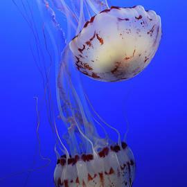 Bob Christopher - Jellyfish 1