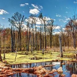 Allen Beatty - Jersey Swamp