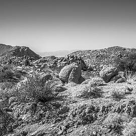 Alexander Kunz - Joshua Tree - Cottonwood Springs Trail