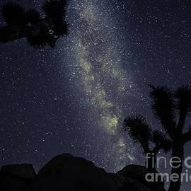Matthew Yeoman - Joshua Tree Starry Night