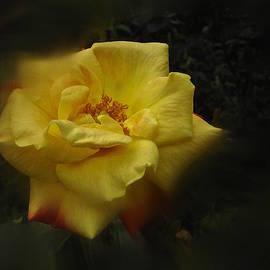 Richard Cummings - June 2016 Rose No. 1