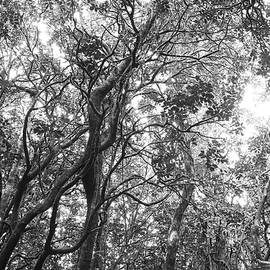 Jungle canopy - Les Cunliffe