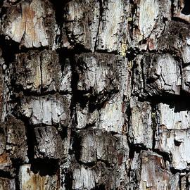 Tom Janca - Juniper Tree Bark