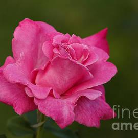 Irina Gladkaja - Just a Rose