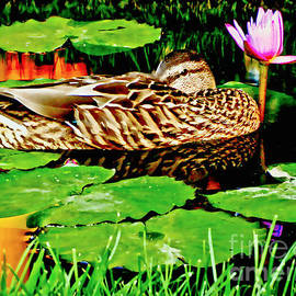 Carol F Austin - Just Being A Duck On A Lazy Day Of Summer