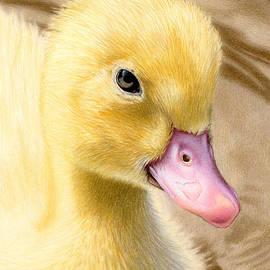 Sarah Batalka - Just Ducky