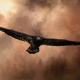 Jai Johnson - Juvenile Bald Eagle In The Sepia Sky
