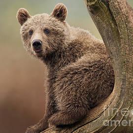 Inge Riis McDonald - Juvenile Brown Bear - 365-5