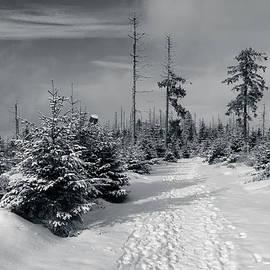 Andreas Levi - Kaiserweg, Harz