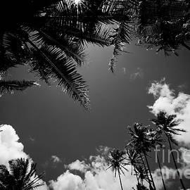 Sharon Mau - Keanae Coconut Palms