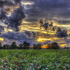 Reid Callaway - King Cotton Sunset Art Statesboro Georgia