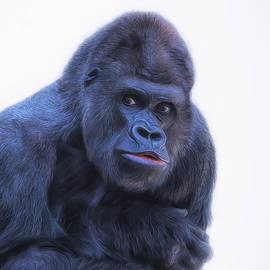 Nestor  Navarro  - King Kong