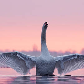 Roeselien Raimond - King of the Water and the Sunset
