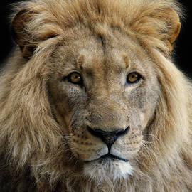 Joachim G Pinkawa - King Without A Crown