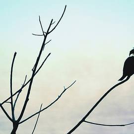 Claude LeTien - Kingfisher
