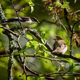 Jouko Lehto - Kiss me. European pied flycatcher