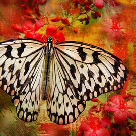 Barbara Manis - Kite Butterfly
