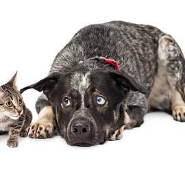 Kitten Annoying Patient Dog - Susan Schmitz