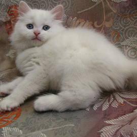 Pamela Benham - Kitten  Pristine Snow White Valentine Blue Eyes Doll Face Long Hair SilkTapestryKittensTM