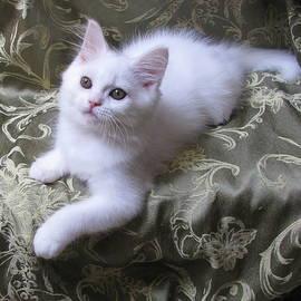 Pamela Benham - Kitten Snow White Silky Fur