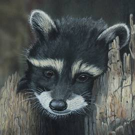 Bob Williams - Kit...The baby raccoon