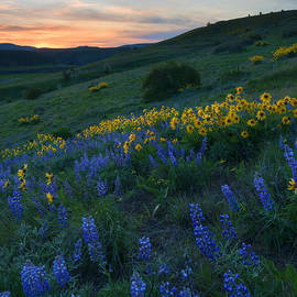 Mike Dawson - Kittitas Wildflower Sunset