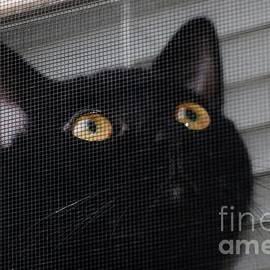 Don Baker - Kitty in the Window