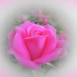 MTBobbins Photography - Knockout Rose Beauty - Pink Vignette