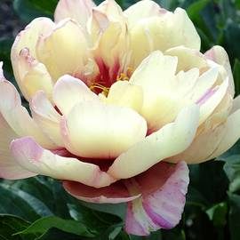 Cindy Treger - Kopper Kettle - Itoh Peony O