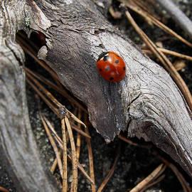 Jouko Lehto - Ladybird