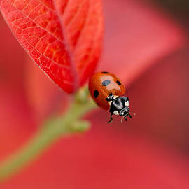 Mickey At Rawshutterbug - Ladybird On An Autumn Leaf