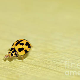 Ladybird Swimming by Kaye Menner
