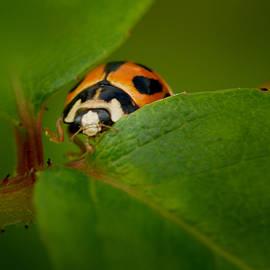 Sarah Greenwell - Ladybug 4