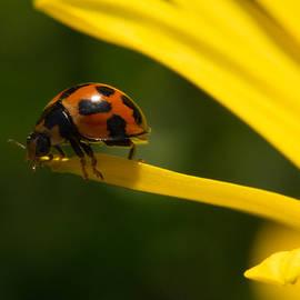 Sarah Greenwell - Ladybug 6