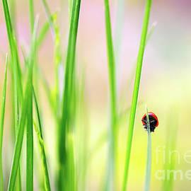 Evgeny Drablenkov - Ladybug in grass