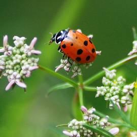 Meeli Sonn - Ladybug in HUntington Botanical Garden