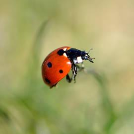 Brad Christensen - Ladybug Ladybug