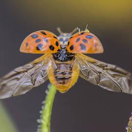 Joy McAdams - Ladybug Ladybug Fly Away Home