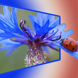 Ericamaxine Price - Ladybug on the Cornflower