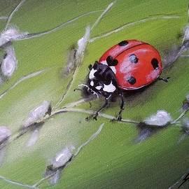 Judit Szalanczi - Ladybug on the leaf