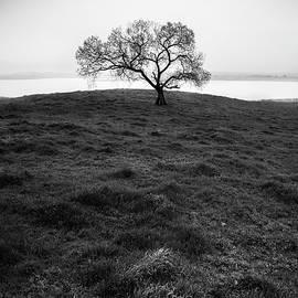 Alexander Kunz - Lake Henshaw - Cottonwood and Grass