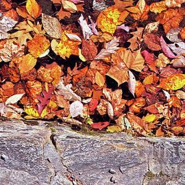 Lydia Holly - Lake Leaves