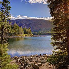 Lynn Bauer - Lake Mary Forest Star