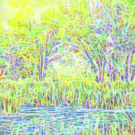 Joel Bruce Wallach - Lake Reeds On A Sunny Day - Pond In Boulder County Colorado