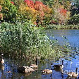 Dora Sofia Caputo Photographic Art and Design - Lakeside Autumn
