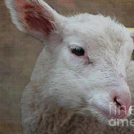Nina Silver - Lamb Lament