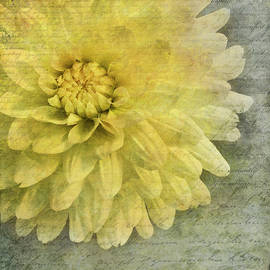 Jill Love - Language of Flowers